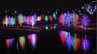 Image of Christmas trees lit up in mauve, blue, green and red, reflected in water