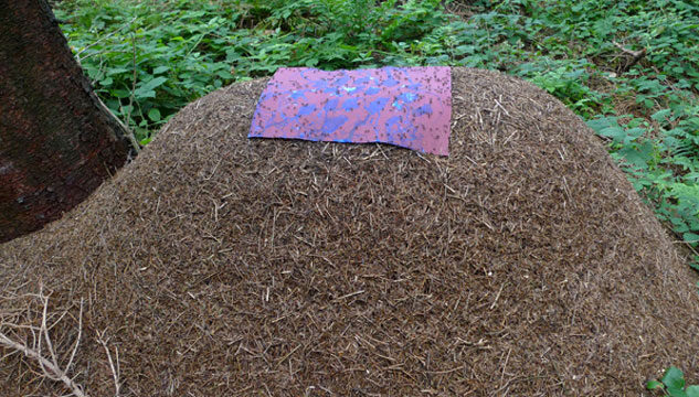 Drawing placed on top of ant heap so that ants walk on it and contribute to it