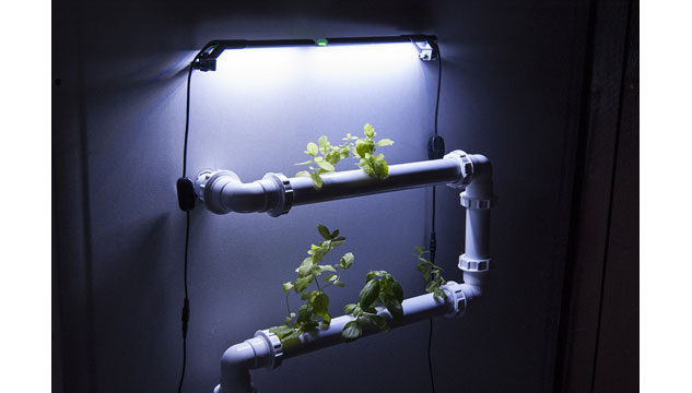 Plants growing out of a plastic pipe