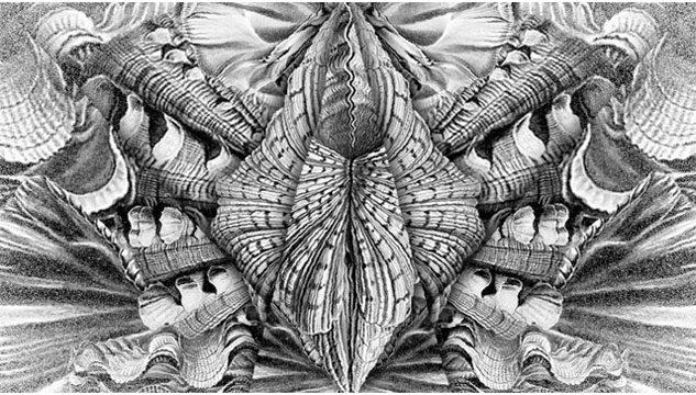 b/w symmetrical drawing looking rather like shells